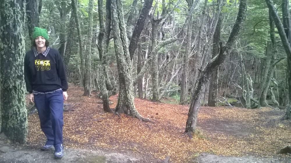 Bosque de Ushuaia en otoño